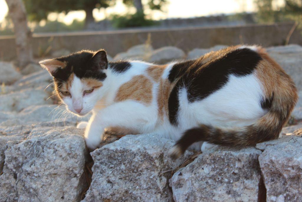 Indigourlaub_Son-Manera-Retreat-Finca-Katze