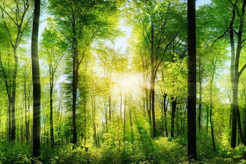 Wald Panorama, die mittig platzierte Sonne wirft schöne Strahlen